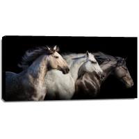Edith Leanne - Horses - Run Gallop