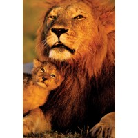 Lion and Cub