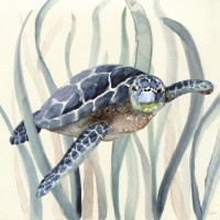 Nan - Turtle in Seagrass I