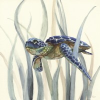 Nan - Turtle in Seagrass II