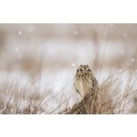 Danita Delimont - Prairie Winter