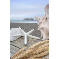 Alan Blaustein - Crescent Beach Shells 12