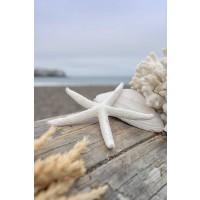 Alan Blaustein - Crescent Beach Shells 13