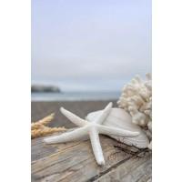 Alan Blaustein - Crescent Beach Shells 14