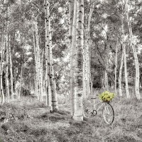 Alan Blaustein - Sunflower Bicycle Ride