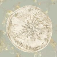 Aimee Wilson - Cone Shells II