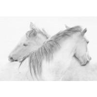 1x - Stas - Horses