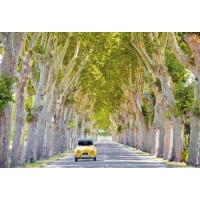 France - Tree Lined Road