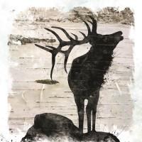 Carol Robinson - Birchbak Elk