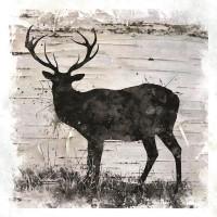Carol Robinson - Bichebark Deer