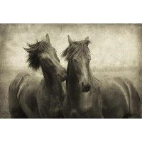 Lars Van De Goor - Horses Don't Whisper,They Just Talk