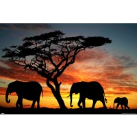 Elephant Love Sunset