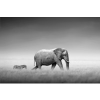 Kings Of Nature - Elephant Zebra