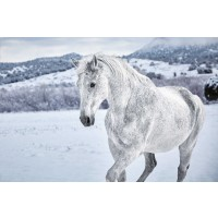 Horse - Cool Winter