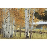 Birch Beauty-Janice Trane Jones