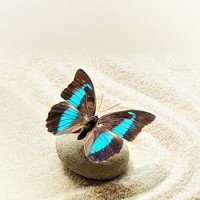 Butterfly on the Sand