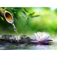 Zen Garden with Massage Stones