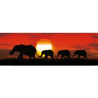 Elephants - Sunset