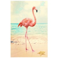 Flamingo - Beach Walk