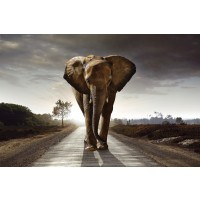 Elephant - Walk on the Road