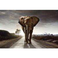 Elephant - Walk on the Road