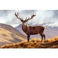 Deer - Mountain Morning