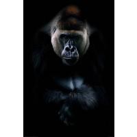 Gorilla - Black