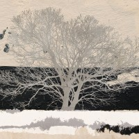 Aprile Alessio - Silver Tree (detail)