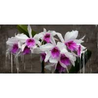Alex Vinci - Orchid blackboard