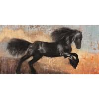 Dario Moschetta - Black Stallion