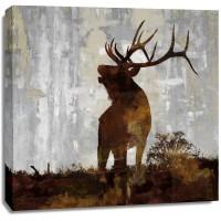 Carl Colburn - Elk