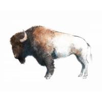Avery Tillmon - Colorful Bison Dark Brown