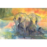 Chris Paschke - Elephants Crop