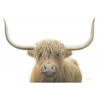 James Wiens - Highland Cow