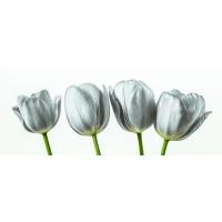 Assaf Frank - Four tulips