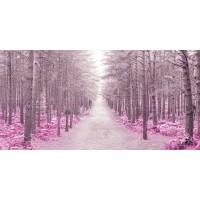 Assaf Frank - Pathway through Autumn forest, FTBR 1844