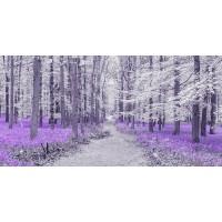 Assaf Frank - Path through bluebell forest, FTBR 1848