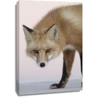 Fox - Hello There