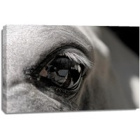 Horse - Black Eye