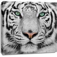 Tiger - Watching You
