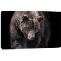 Bear - Busy Day