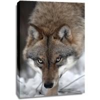 Wolf - Hungry Killing Machine