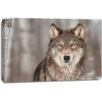 Wolf - Winter Forest