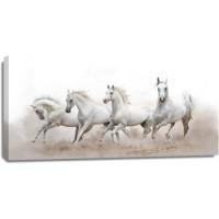 Horses - Morning Run