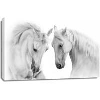 Horse - Nice Encounter