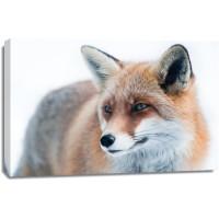 Fox - Cold Hunter