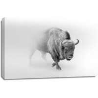 Foggy Wildlife - Bison