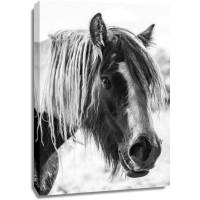 Horse - Hairy Friend
