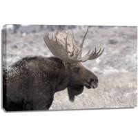 Moose - End of The Season