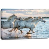 Horses - Morning Race